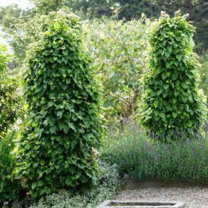 Träd & Växter