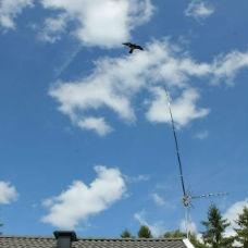 Fågelskrämma & Skadedjur | 5 st Kompletta Fågelskrämmor Höken 6 meter