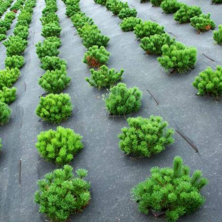 Träd & Växter   Ogräsduk bio nedbrytbar