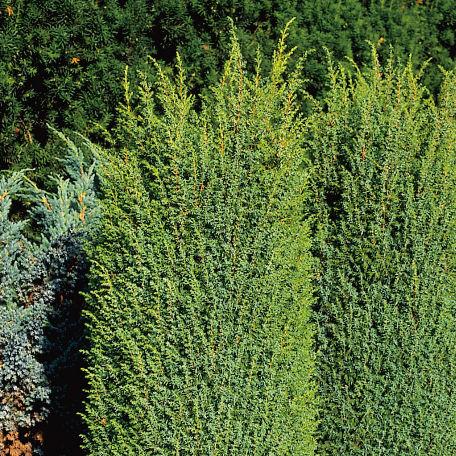Träd & Växter | Träd-en