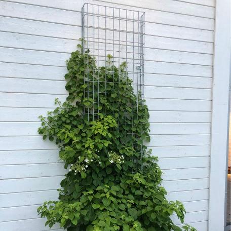 Plantering | Stålspaljé