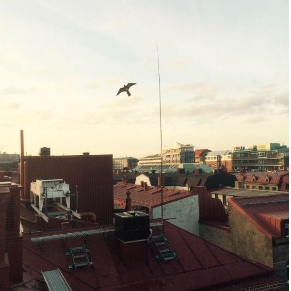 Fågelskrämma & Skadedjur | 3 st Kompletta Fågelskrämmor Höken 6 meter